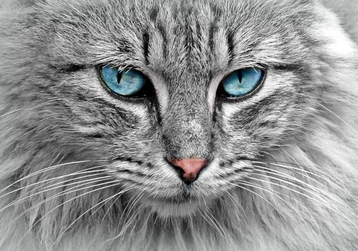 cat-g4a446d667_640